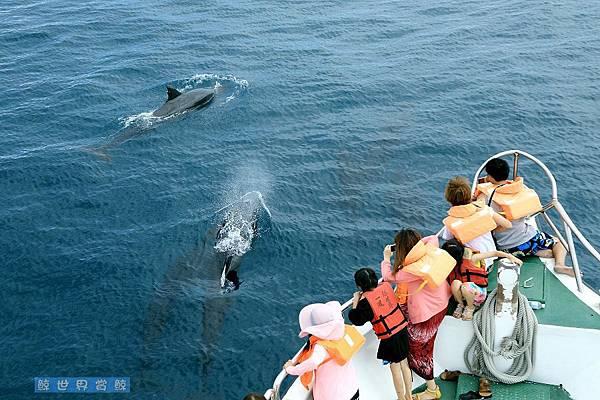 2013.07.21 偽虎鯨~~來了!