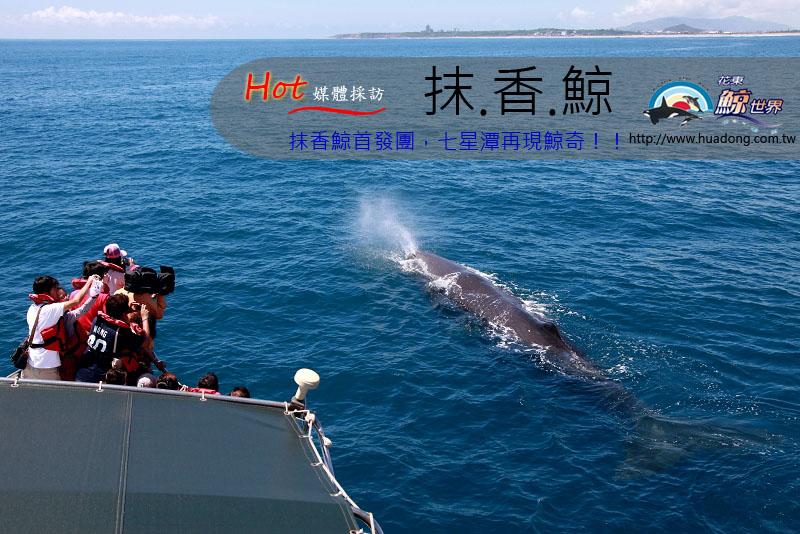 01船首抹香鯨拷貝.jpg
