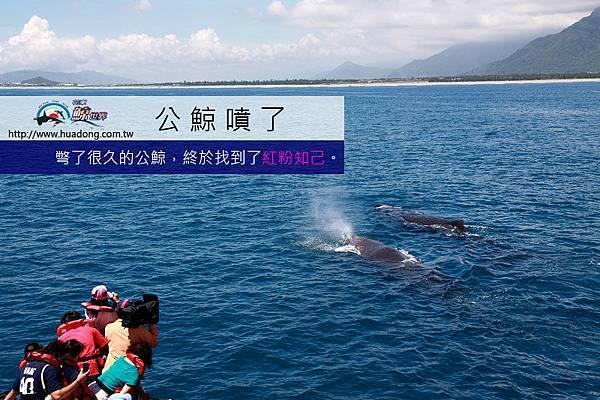 0601公鯨噴氣拷貝.jpg
