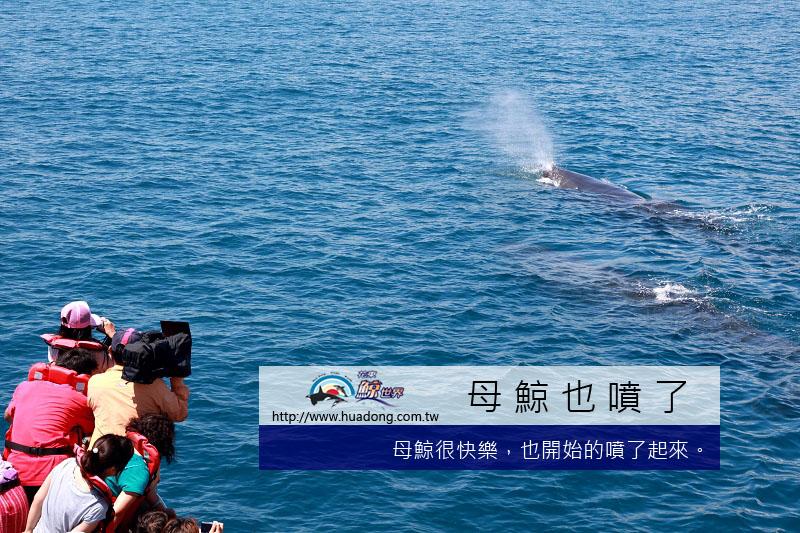 0602母鯨噴氣拷貝.jpg