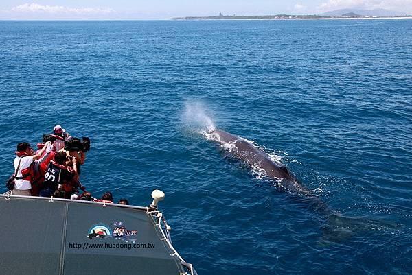0802end船首抹香鯨拷貝.jpg