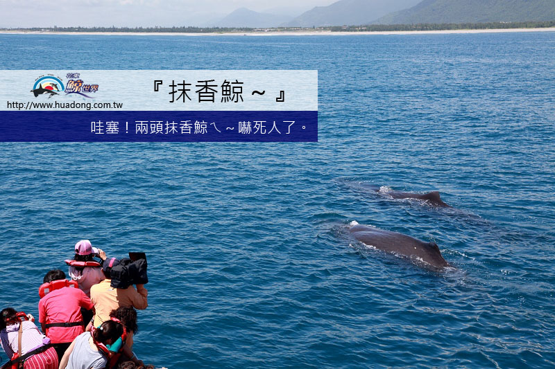 0501雙鯨弓背拷貝.jpg