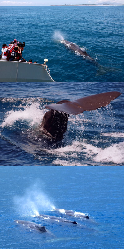 抹香鯨400x800.jpg