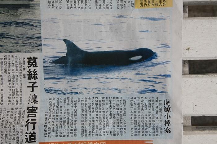 虎鯨by更生日報03.jpg