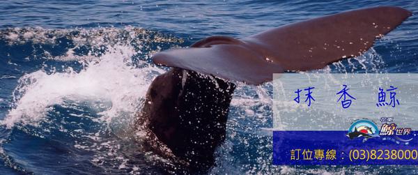 抹香鯨---大尾巴拷貝.jpg