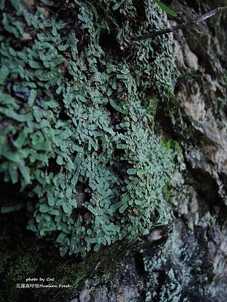 DSCN7602-vert