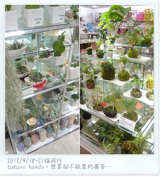 201209福岡26.jpg
