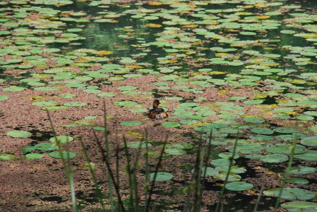 5水生植物池.JPG
