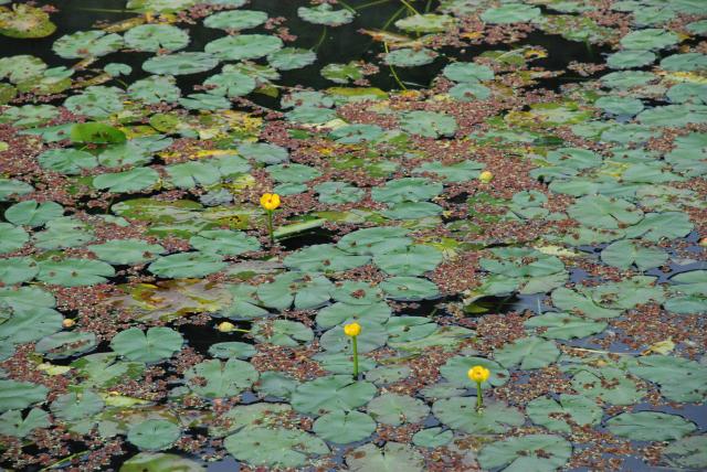 4水生植物池.JPG