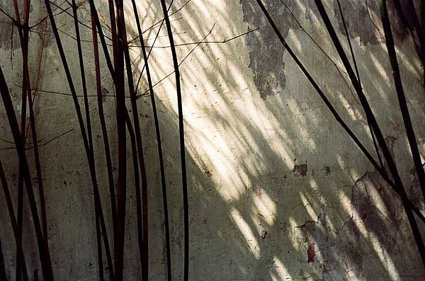 陳建宇1.jpg