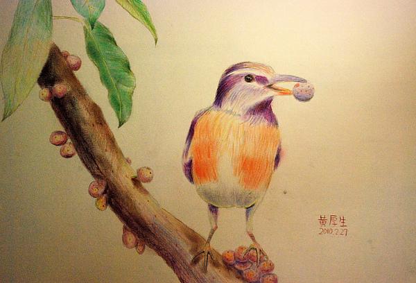 鳥與種子(粉彩,色鉛筆)
