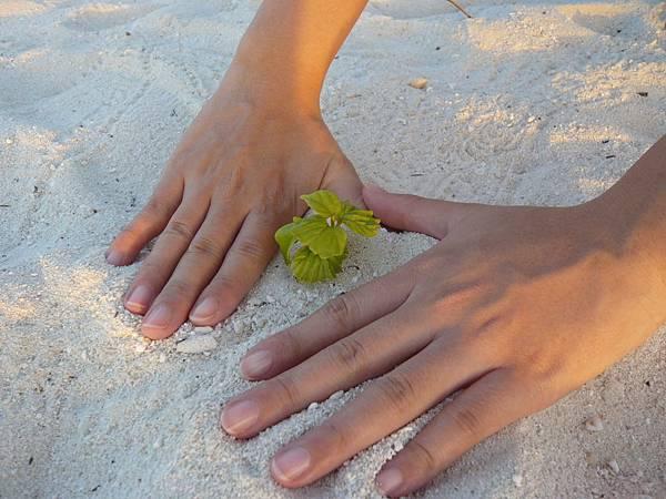 沙灘也是會長草的.JPG