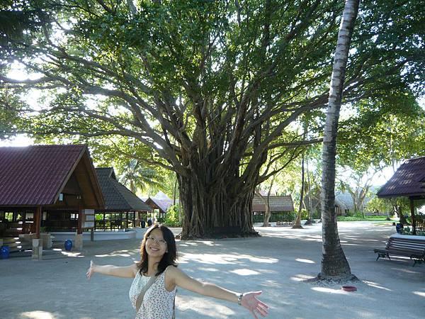 島上的大榕樹.JPG