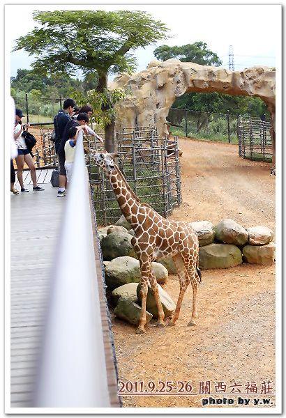 201109六福莊_羊羊鹿_5.jpg