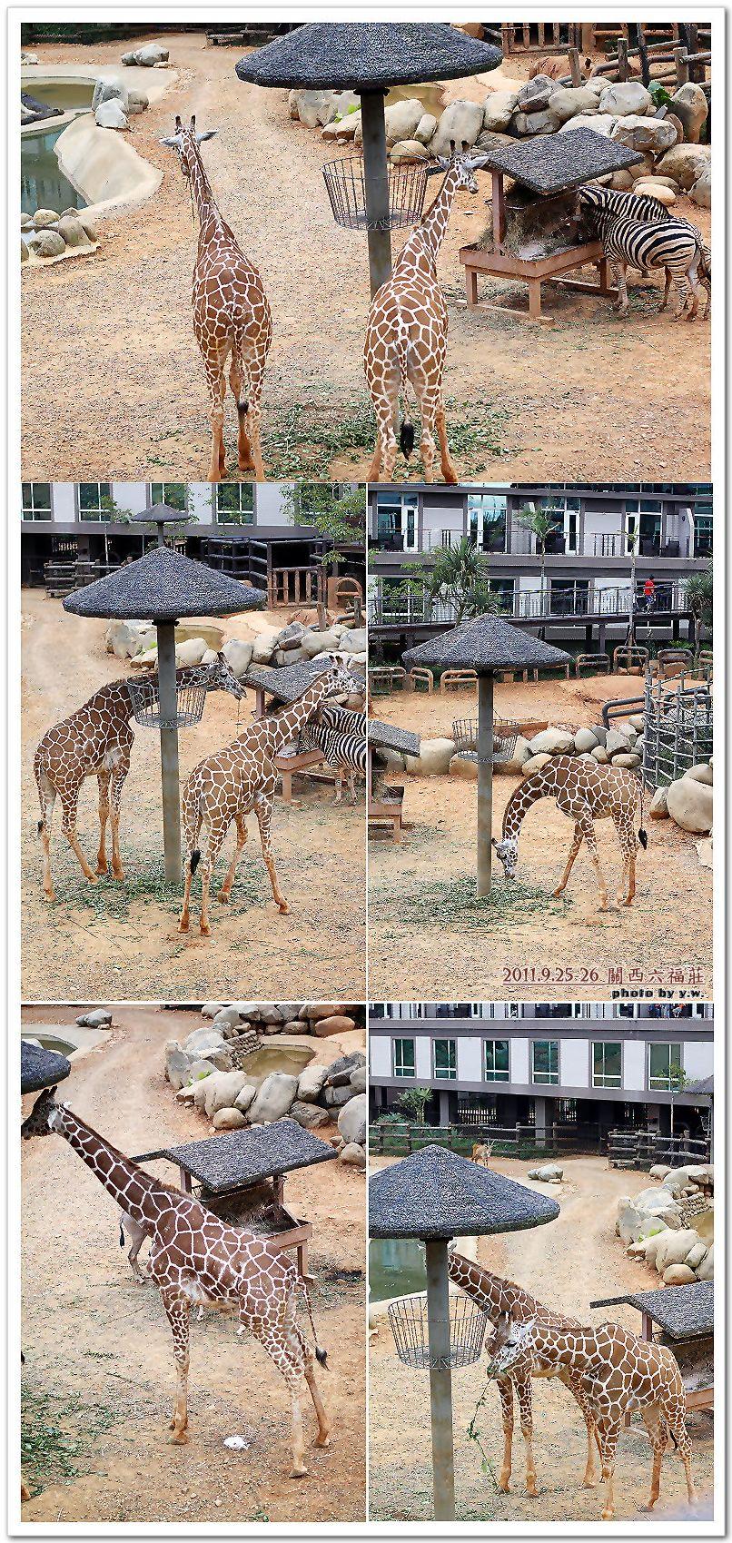 201109六福莊_羊羊鹿合集.jpg
