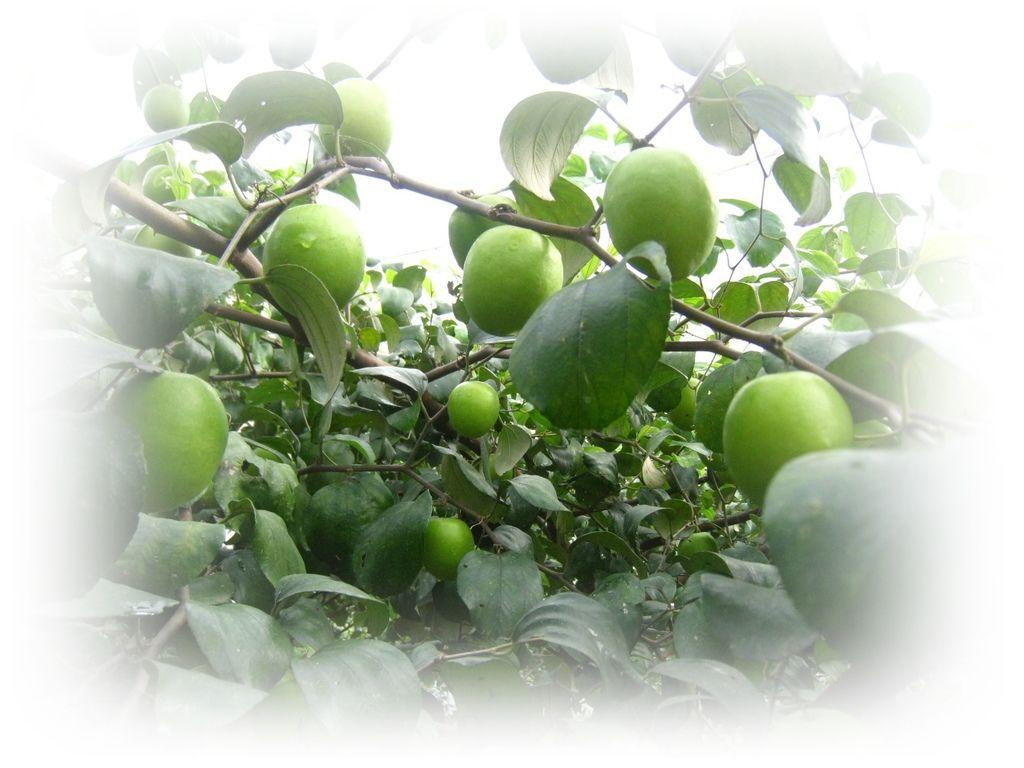 回歸自然有機蔬果4