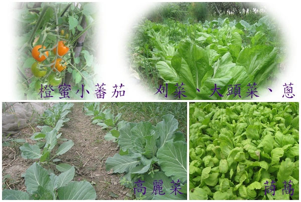 回歸自然有機蔬果3