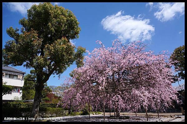 涉成園 櫻花季