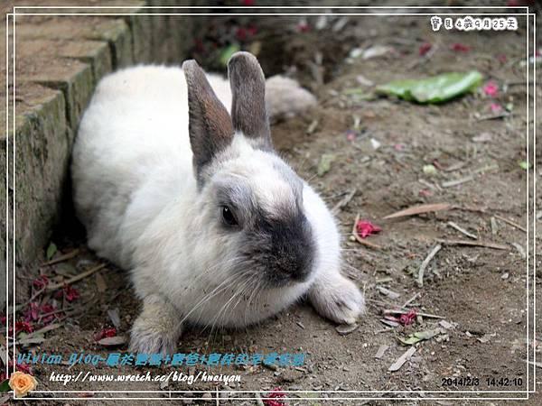 4Y9M-兔子二店IMG_310001.jpg