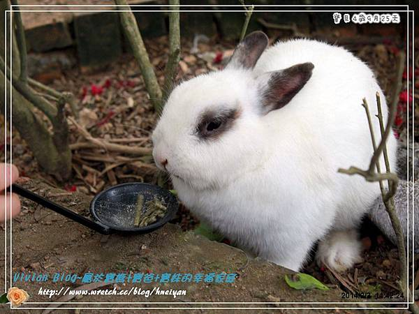 4Y9M-兔子二店IMG_310101.jpg