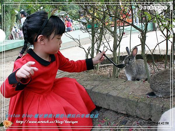 4Y9M-兔子二店IMG_310901.jpg