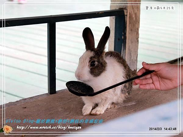 4Y9M-兔子二店IMG_312001.jpg