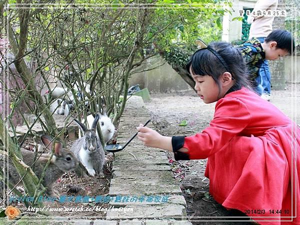 4Y9M-兔子二店IMG_312401.jpg