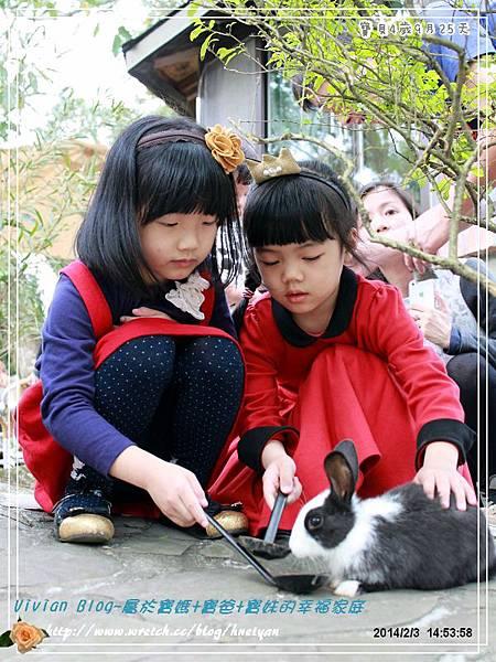 4Y9M-兔子二店IMG_318801.jpg