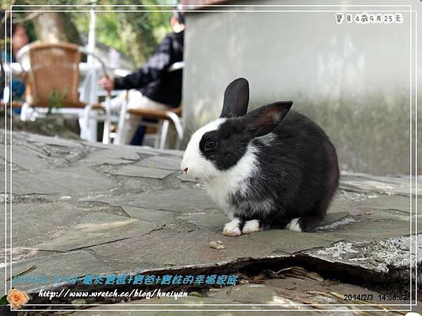 4Y9M-兔子二店IMG_321501.jpg