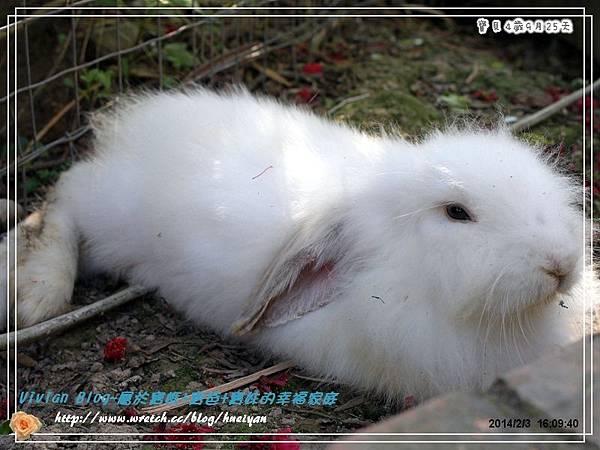 4Y9M-兔子二店IMG_334701.jpg
