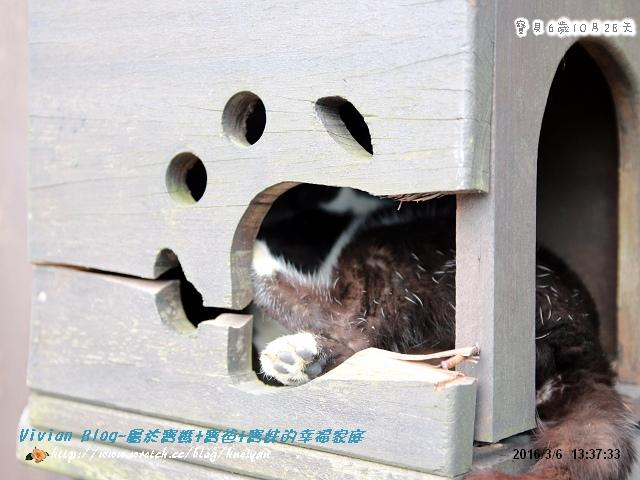 6Y10M-猴硐平溪之旅IMG_003601.jpg