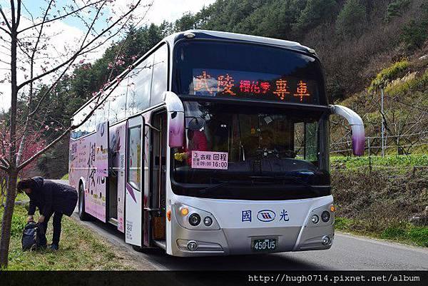 20150214武陵賞櫻_347 (复制).JPG