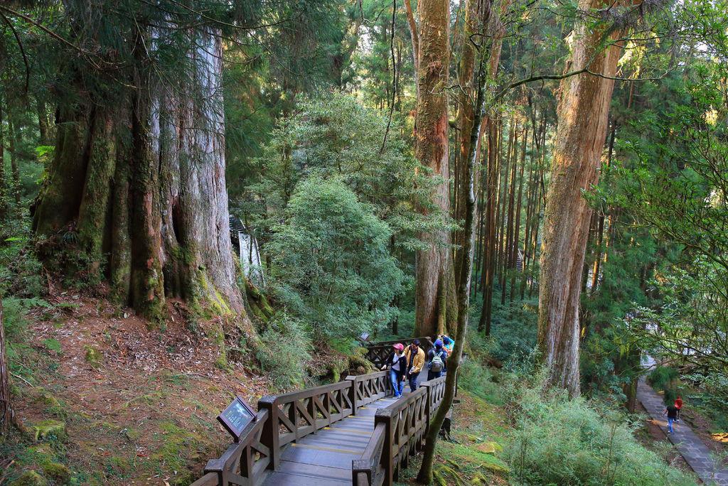 嘉義阿里山森林遊樂區 阿里山神木群