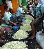 印度茉莉花市