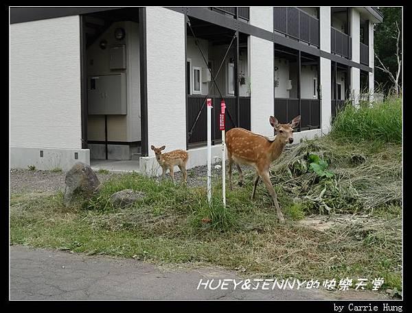 20130720_01 清晨知床野營場09