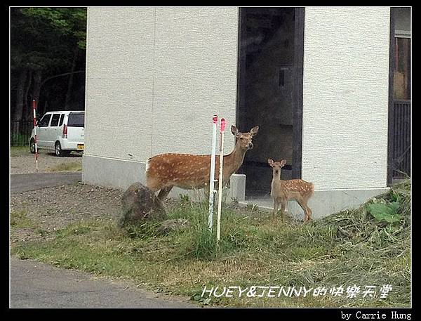 20130720_01 清晨知床野營場10