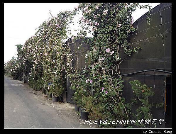 20121109_03松旺農場設施07