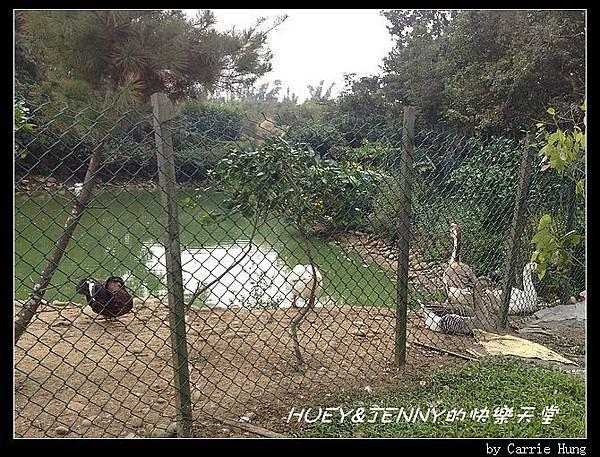 20121109_15園區遊樂07