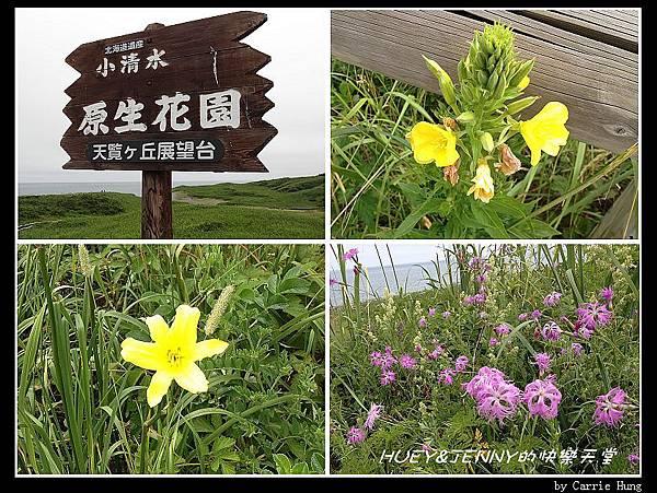 20130721_06小清水原生花園16