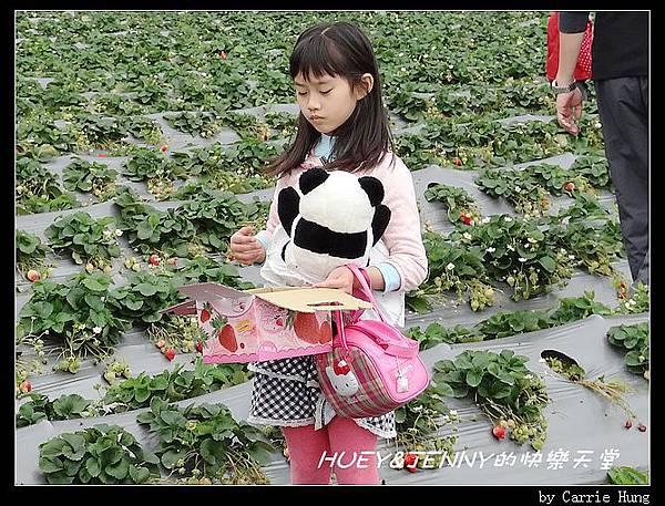 20140322-23-18 採草莓去06