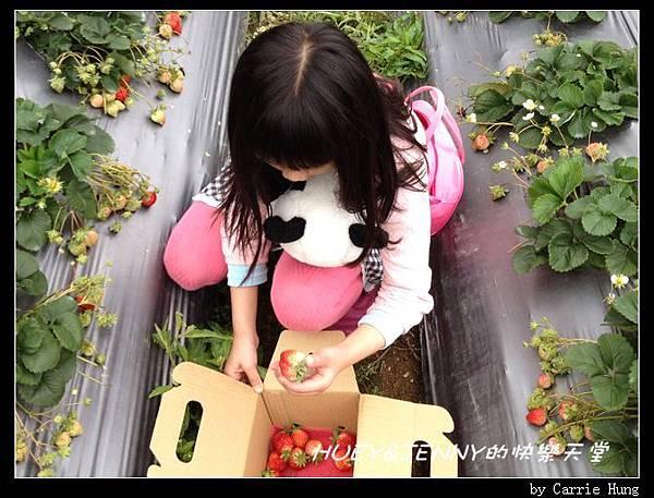 20140322-23-18 採草莓去11