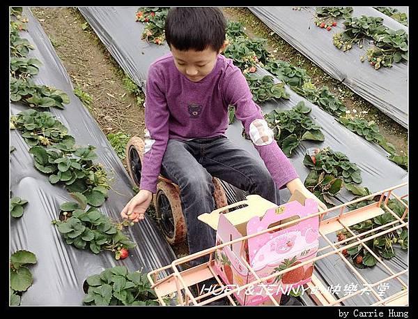 20140322-23-18 採草莓去10