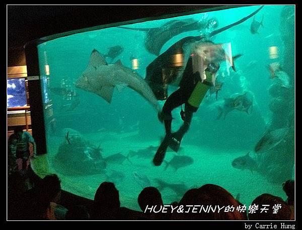 20140601_04 澎湖海洋水族館 87