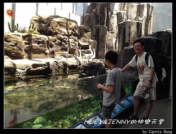 20140601_04 澎湖海洋水族館 85
