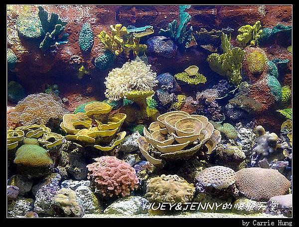 20140601_04 澎湖海洋水族館 43