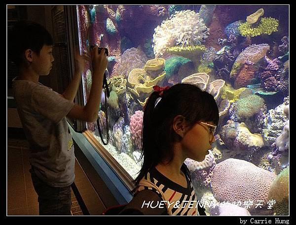 20140601_04 澎湖海洋水族館 90