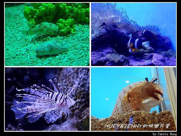 20140601_04 澎湖海洋水族館 91