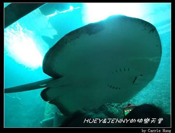 20140601_04 澎湖海洋水族館 37