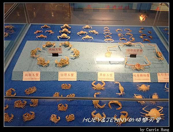20140601_09 竹灣螃蟹博物館與大義宮海龜 20