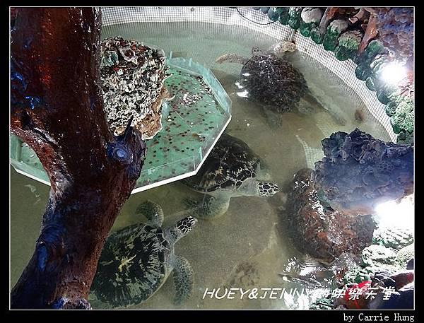 20140601_09 竹灣螃蟹博物館與大義宮海龜 14